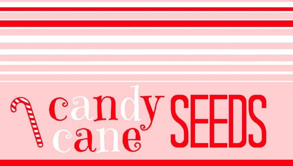 candy cane seeds with candy cane