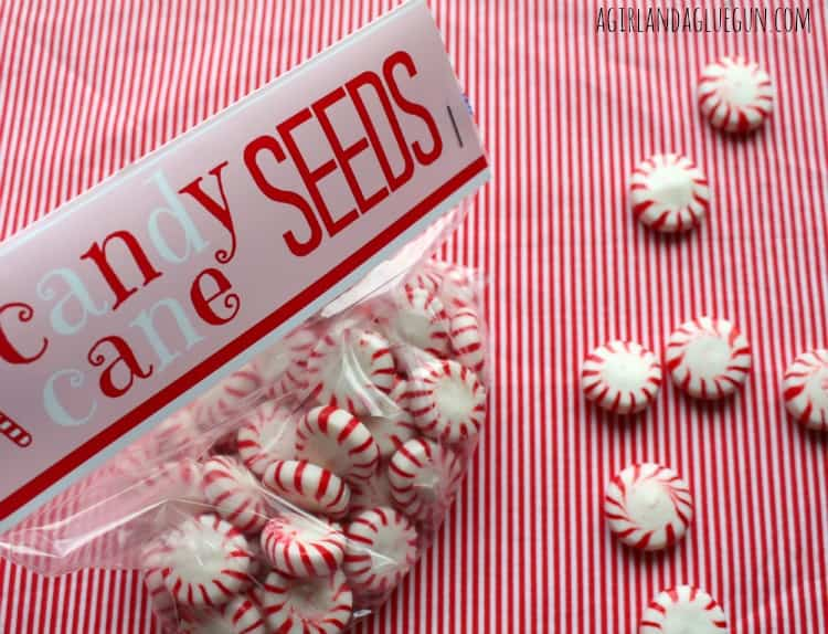 Candy Cane Seeds Printables A Girl And A Glue Gun