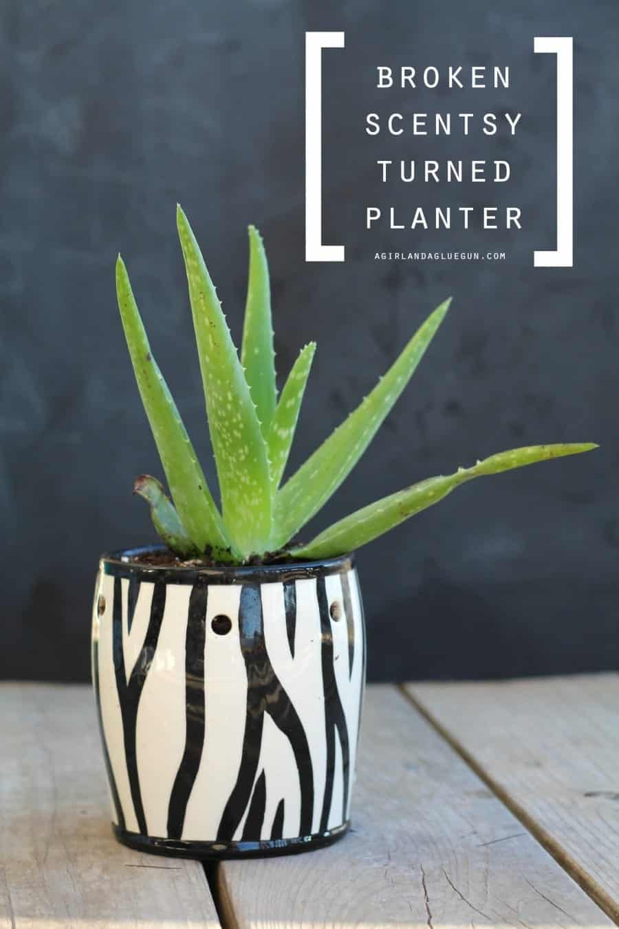 broken scentsy turned planter