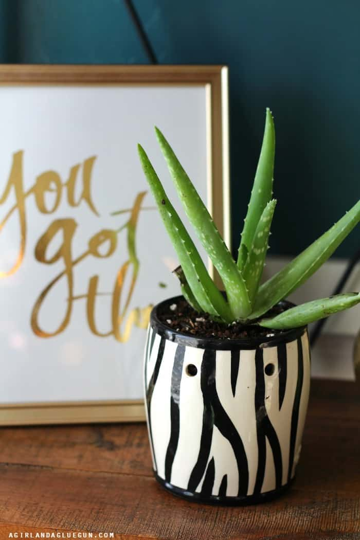 succulent planter out of a scentsy