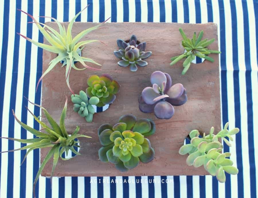 succulent holder planter