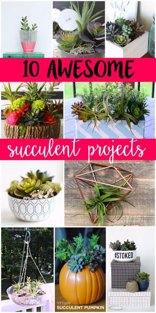 diy-succulent-projects