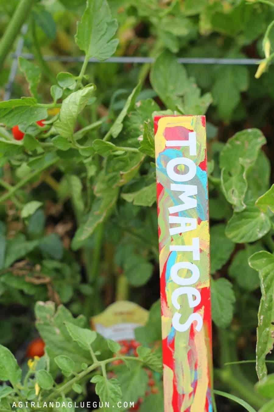 tomato garden maker