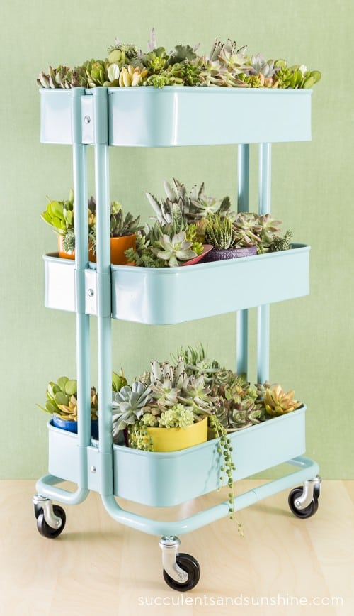 Create-a-fun-succulent-container-garden-in-an-Ikea-Cart-Succulents-and-Sunshine-500x868
