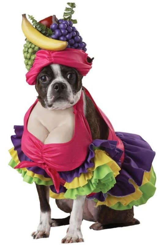 Cute Dog Halloween Costumes: The Best Halloween Costumes For Dogs