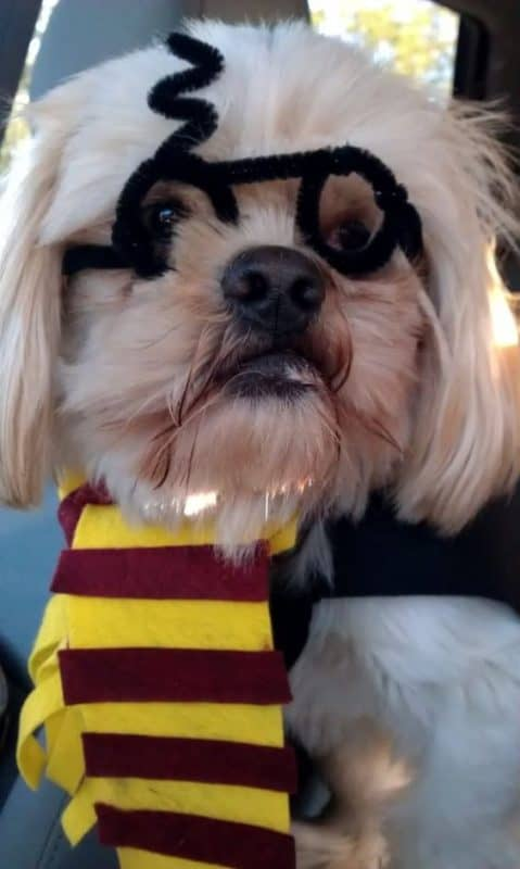 Harry potter diy dog costume & the best Halloween Costumes for Dogs - A girl and a glue gun