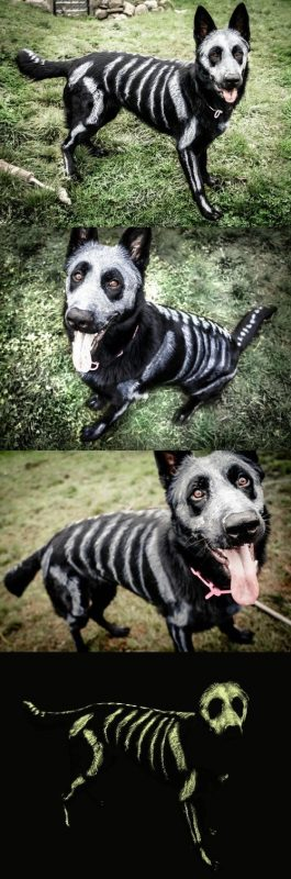 Painted Skeleton Dog Costume Batman And Robin Costumes