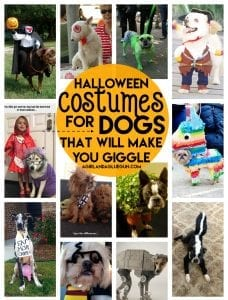 the best Halloween Costumes for Dogs