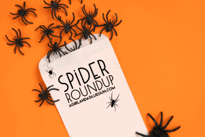 spider roundup